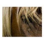 Emotional Horse Postcard