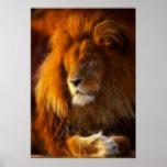 Empapando para arriba el Sun, rey del león de la Póster