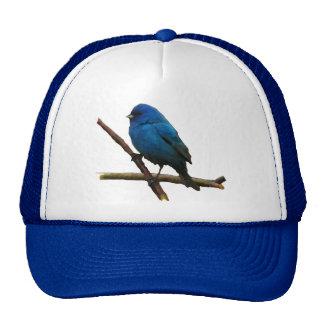 Empavesado de añil gorra