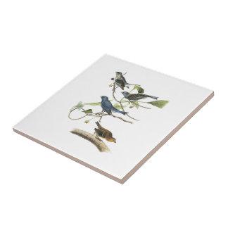 Empavesado de añil por Audubon Azulejo Cuadrado Pequeño