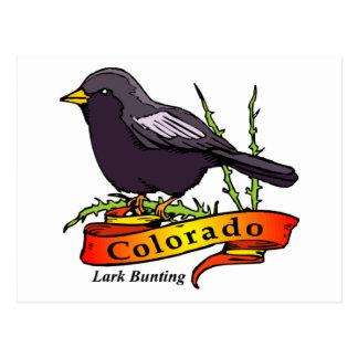 Empavesado de la alondra de Colorado Tarjetas Postales