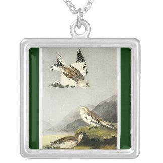 Empavesado de nieve - John James Audubon Collar Plateado