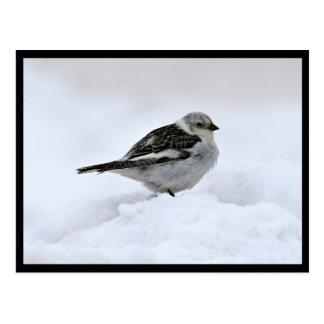 Empavesado de nieve tarjetas postales