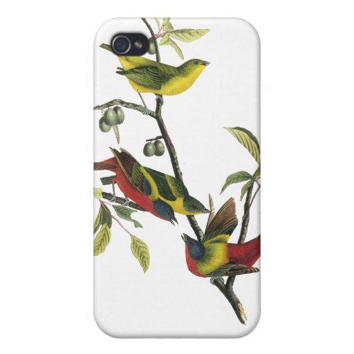 Empavesado pintado Audubon de Juan iPhone 4/4S Funda