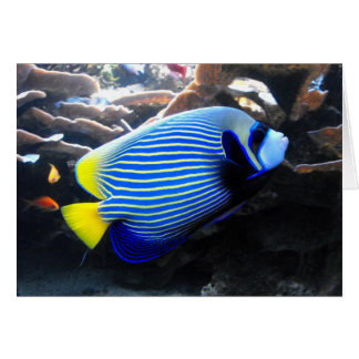 Emperor Angelfish Card