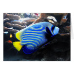Emperor Angelfish Greeting Cards