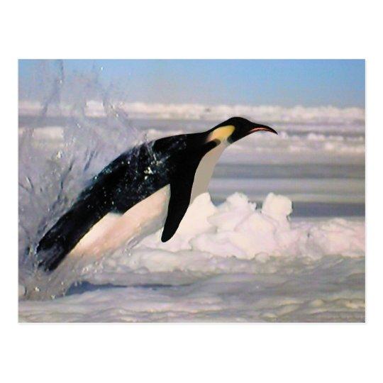 Emperor arctic and antarctic penguin postcard