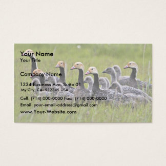 Emperor Geese Business Card