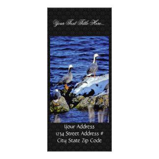Emperor Geese in Winter Habitat Rack Cards