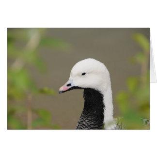 Emperor Goose Card
