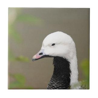 Emperor Goose Ceramic Tile
