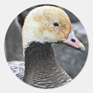 Emperor Goose Classic Round Sticker