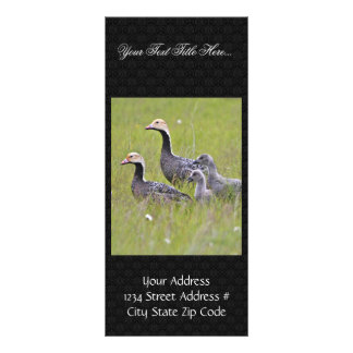 Emperor Goose Family Group Rack Cards