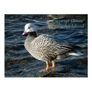 Emperor Goose on Unalaska Island Postcard