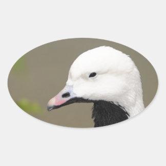 Emperor Goose Oval Sticker