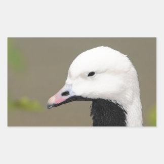 Emperor Goose Rectangular Sticker