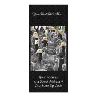 Emperor Goose Round-up Custom Rack Card