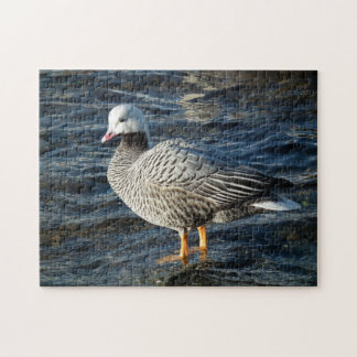Emperor Goose Standing in Shallow Water Jigsaw Puzzle