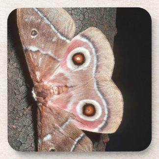 Emperor Moth (Saturniidae) On Tree Beverage Coaster