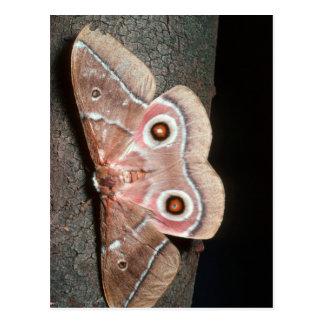 Emperor Moth (Saturniidae) On Tree Postcard