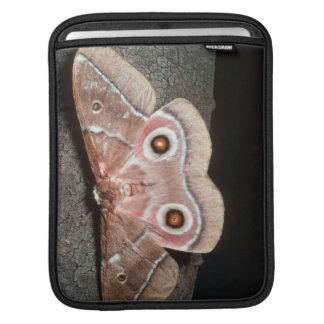 Emperor Moth (Saturniidae) On Tree Sleeve For iPads
