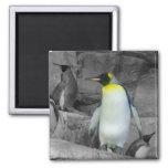 Emperor Penguin 2 Inch Square Magnet