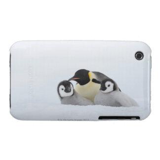 Emperor Penguin (Aptenodytes forsteri) 2 iPhone 3 Case-Mate Case