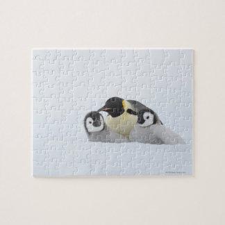 Emperor Penguin (Aptenodytes forsteri) 2 Jigsaw Puzzle