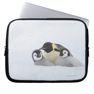 Emperor Penguin (Aptenodytes forsteri) 2 Laptop Computer Sleeve