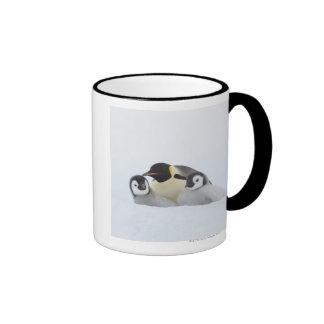 Emperor Penguin (Aptenodytes forsteri) 2 Coffee Mugs