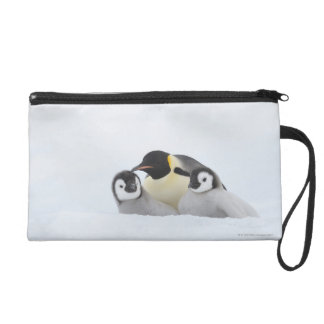 Emperor Penguin (Aptenodytes forsteri) 2 Wristlet Purse