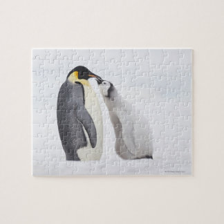 Emperor penguin (Aptenodytes forsteri), chick Jigsaw Puzzle