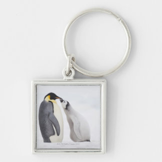 Emperor penguin (Aptenodytes forsteri), chick Keychain