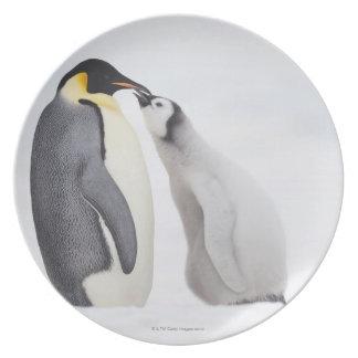 Emperor penguin (Aptenodytes forsteri), chick Melamine Plate