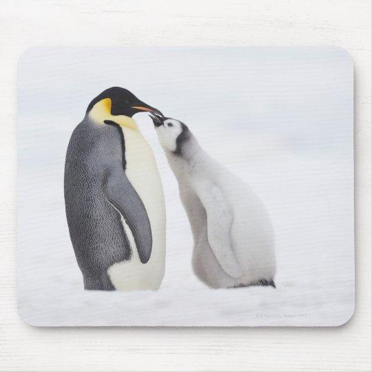 Emperor penguin (Aptenodytes forsteri), chick Mouse Pad