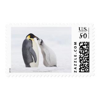 Emperor penguin (Aptenodytes forsteri), chick Postage