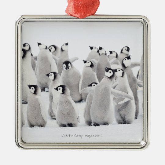 Emperor penguin (Aptenodytes forsteri), group of Metal Ornament
