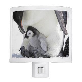 Emperor Penguin At Snow Hill Island Night Light