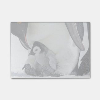 Emperor Penguin At Snow Hill Island Post-it Notes