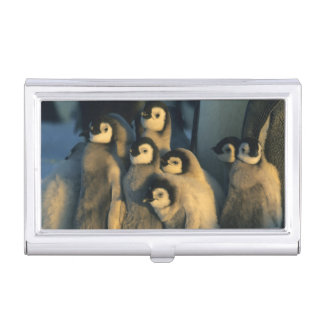 Emperor Penguin chicks in creche, Aptenodytes Case For Business Cards