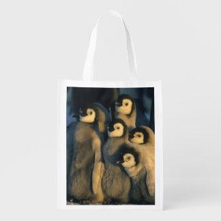 Emperor Penguin chicks in creche, Aptenodytes Grocery Bag