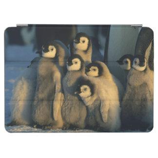 Emperor Penguin chicks in creche, Aptenodytes iPad Air Cover