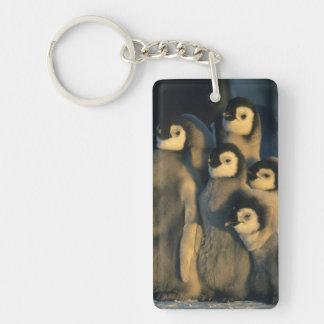 Emperor Penguin chicks in creche, Aptenodytes Keychain