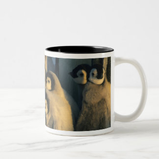 Emperor Penguin chicks in creche, Aptenodytes Two-Tone Coffee Mug