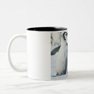 Emperor Penguin Chicks - mug