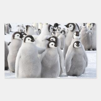 Emperor Penguin Chicks - sticker