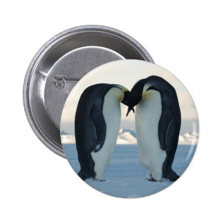 Emperor Penguin Courtship Buttons