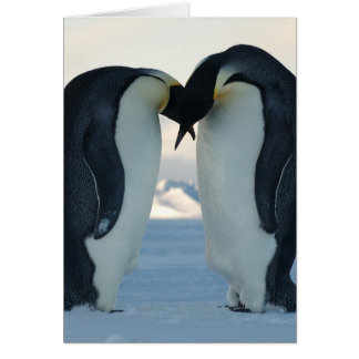 Emperor Penguin Courtship Card