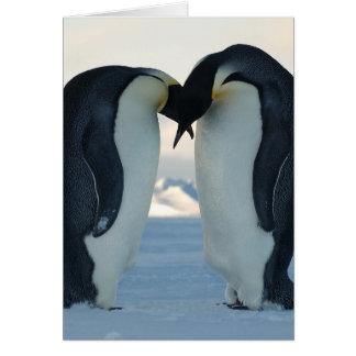 Emperor Penguin Courtship Card
