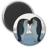 Emperor Penguin Courtship Fridge Magnets
